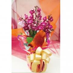 長潁農業 蘭花伴手禮盒-大