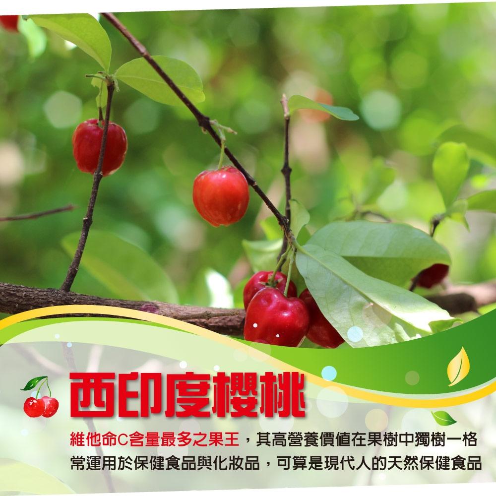 介紹圖-櫻桃C-022 西印度櫻桃介紹